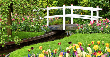 Comment garder son jardin en bonne santé
